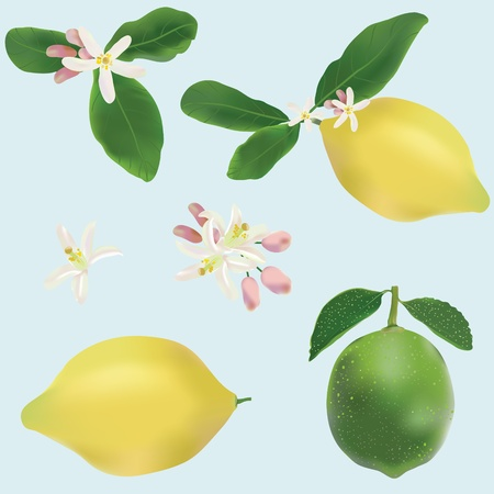 Lemon and lime fruits and flowers icon vector set Vector