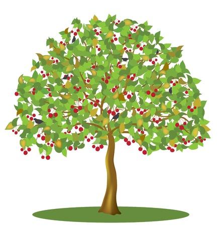 arbol de cerezo: Cerezo con las bayas y las aves aisladas sobre fondo blanco