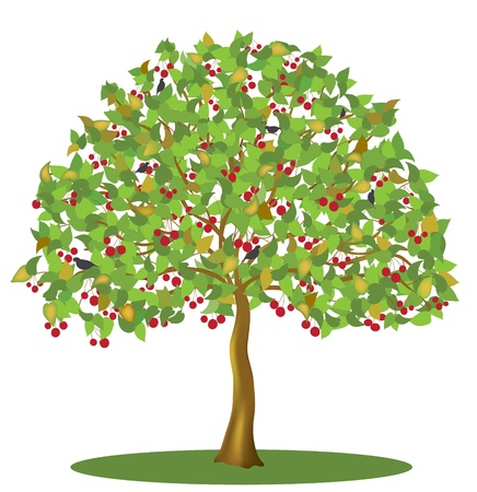 Cherry tree with berries and birds isolated on white background Vector