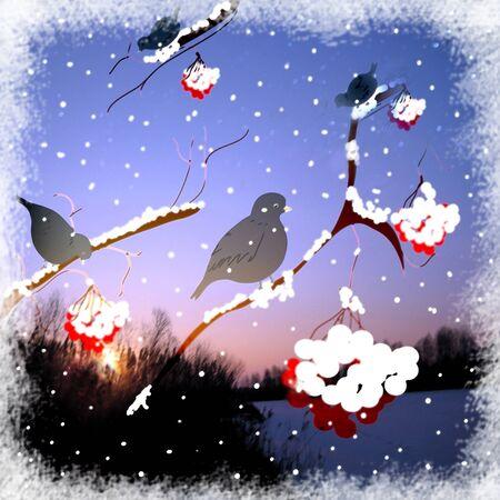 ashberry: Card with birds ,ashberry, snowfall,sky,trees.