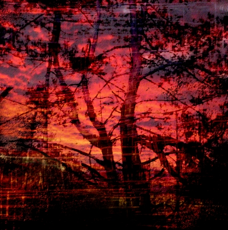 dark forest: Silhouette of trees on cloudy sunset background