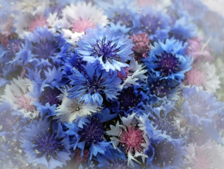 haze: Floral greeting background with blue cornflowers with haze Stock Photo
