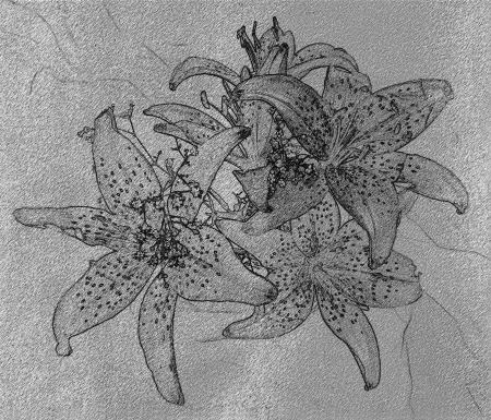 flower age: Black and white aged grunge stained and cracked wall  background with lilies Stock Photo
