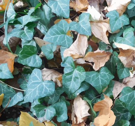 dead leaf: Autumnal background with green ivy leafs and dry dead foliage on earth Illustration