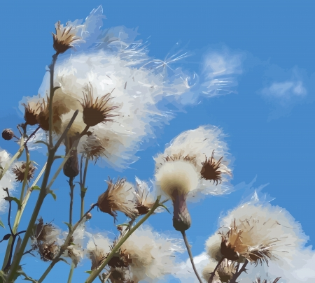 White fuzzy wild flowers with flying seeds on blue sky background Vector