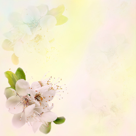hazy: Greeting floral card with blossom cherry on grunge stained hazy background in pastel colors