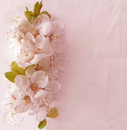 jammed:     Floral background with blossom cherry in pastel colors