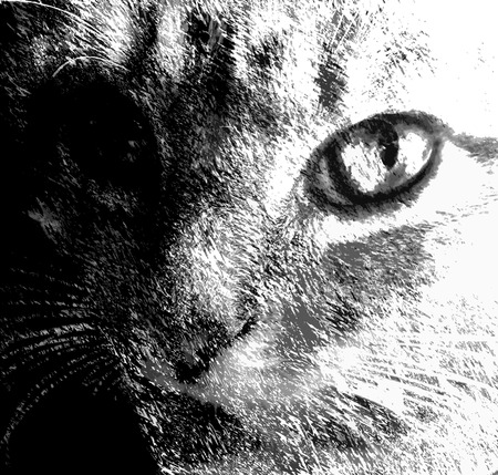 cat call: Sketching face of cat in black and white design