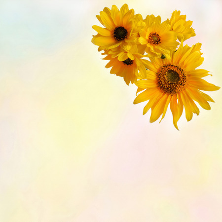 shined: Greeting floral card with stylized  bouquet of sunflowers on colorful watercolor background Stock Photo