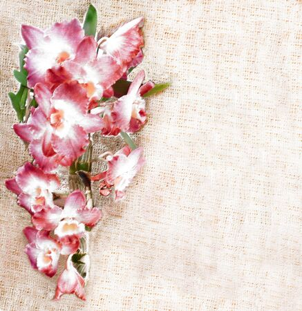 pink orchid: Greeting floral card  with pink orchid flowers on grunge striped beige burlap background