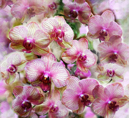 hazy: Pink and lilac orchid flowers on grunge stained colorful hazy background Stock Photo