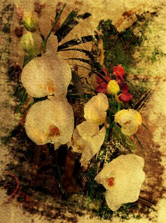 vintage photo: Yellowed grunge stained aged photo with branch of white orchid