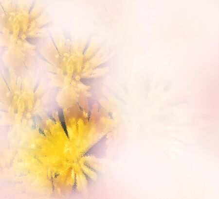 floral grunge: Floral greeting card with yellow chrysanthemums on pink grunge hazed background