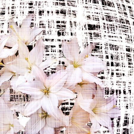 grunge floral: Floral background with stylized bouquet of white lilies on grunge striped and checkered backdrop