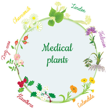 Vector round banner with healing medical plants of chamomile,calendula,dog rose,valerian,linden,hawthorn