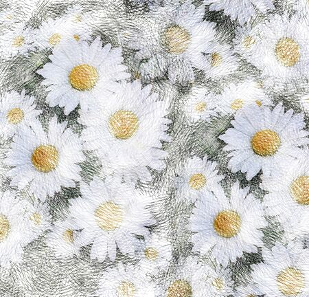 Grunge striped sketching floral background with white chamomiles