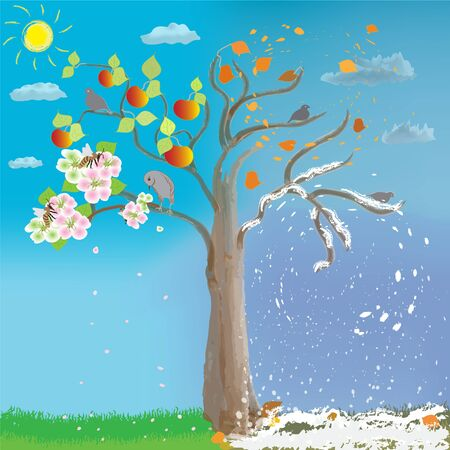 Apple tree in four seasons on cloudy sky background with sun. Spring, summer, autumn, winter.  Flowers, bee, birds,  pollination, fruits, leaf falling, snowfall. Childish design. Illustration