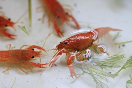 shrimps photo
