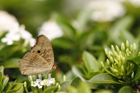 Beautiful butterfly on wildflower  photo