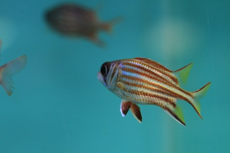 Fish in the aquarium glass  Stock Photo - 13516209