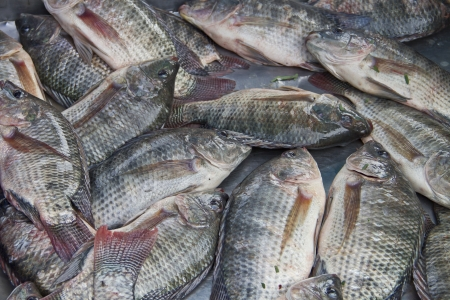 Tilapia ,dry fish,thailand  Stock Photo