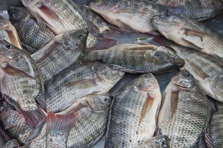 tilapia: Tilapia ,dry fish,thailand  Stock Photo