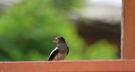 hunted: aves cazadas gusano en el pico Foto de archivo