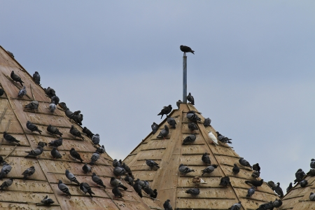 thatched roof: birds on the thatched roof