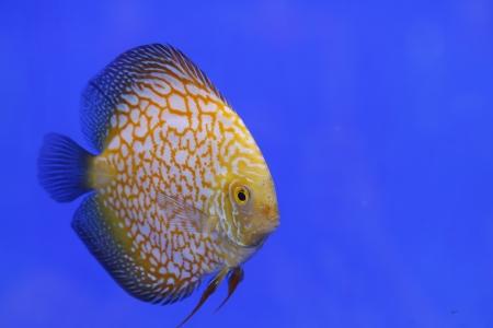 fish in the aquarium glass Stock Photo - 15035344