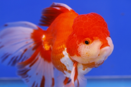 fish in the aquarium glass Stock Photo - 15126047