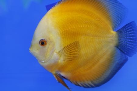 fish in the aquarium glass Stock Photo - 15126070