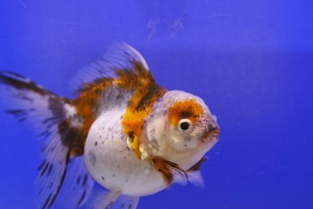 fish in the aquarium glass Stock Photo - 15126134