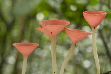 Mushrooms in the forest  Mushroom Champagne  版權商用圖片