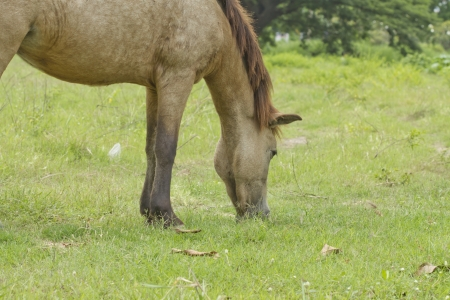 gelding: Horse on the farm
