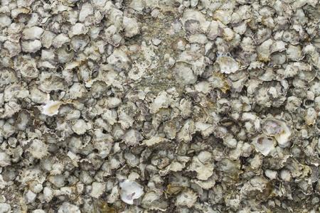 A black rock full of fossilized seashells 版權商用圖片