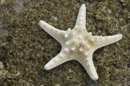 Starfish on the rock beach Stock Photo - 16220706