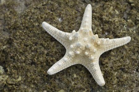 Starfish on the rock beach Stock Photo - 16220706