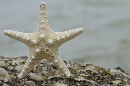 Starfish on the rock beach photo