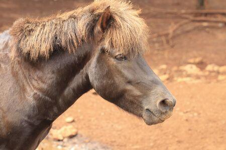 cabeza de caballo: cabeza de caballo