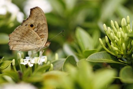 在野花五顏六色的蝴蝶