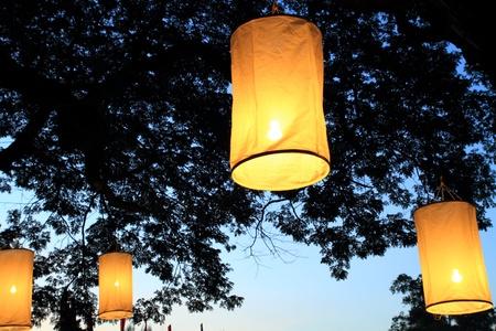 paper Lanterns on tree branch