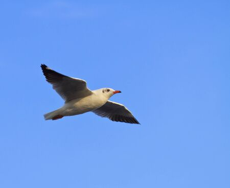 Blue Sky and seagull photo