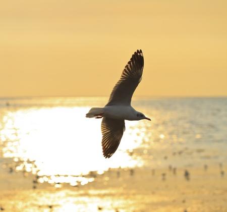 edmonds: Seagull Stock Photo