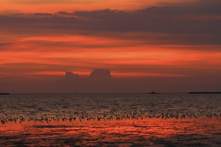 edmonds: Many seagulls  themselves in the sunset