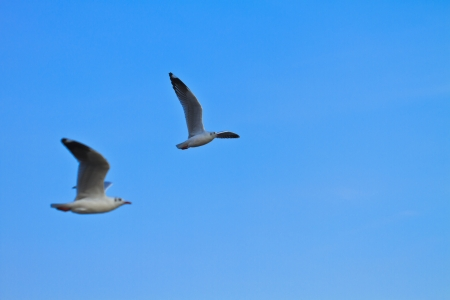 Blue Sky and seagulls Stock Photo - 17109717