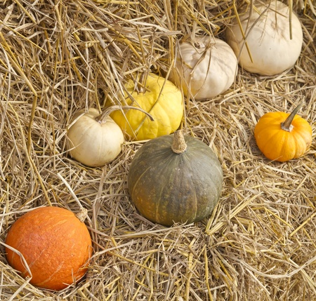 multi colored pumpkins photo