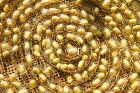 silkworm cocoons Stock Photo