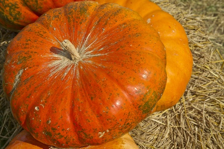 multi colored pumpkins Stock Photo - 17416828