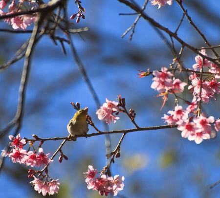 Cute bird sitting on blossom tree branch