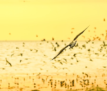 group Of seagull birds flying over sunset Stock Photo - 17964068